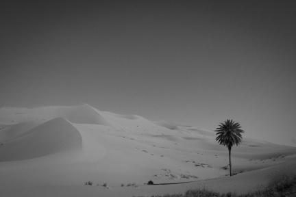 Sahara / Morocco